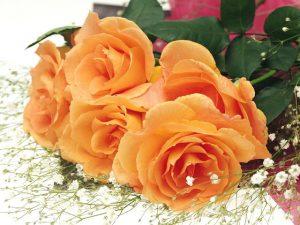 Các loài hoa tượng trưng cho tình bạn vĩnh cửu