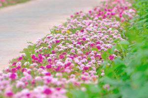 Những loài hoa mang ý nghĩa lạnh lùng vô cảm trong tình yêu