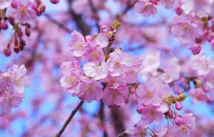Những loài hoa tượng trưng cho sự chia ly