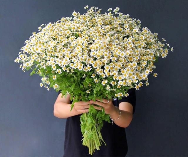 8 loại hoa nhỏ màu trắng - cúc tana